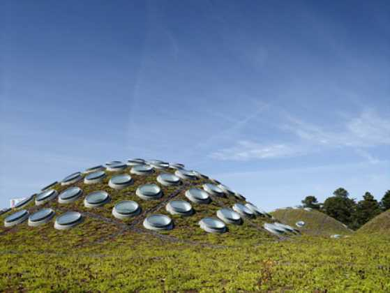 california-academy-of-sciences-living-roof